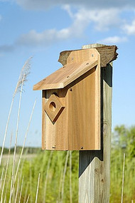 Heartwood Mahogany Trail Box Bluebird Bird House