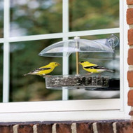 Droll Yankees Winner Window Bird Feeder W-1