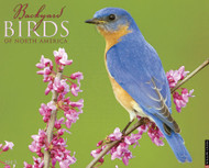 Willow Creek Press Backyard Birds 2013 Calendar