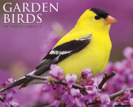 Willow Creek Press Garden Birds 2013 Calendar