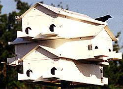 """Lonestar Goliad Purple Martin House 12 Rm  Lone Star Purple Martin Houses set the standard for quality purple martin house construction, and the Goliad is no exception. Made of 0.04 gauge white aluminum, this house eliminates all of the drawbacks of a wooden house. The Goliad is lightweight, making it easy to raise and lower for convenient maintenance. Also, the aluminum dissipates heat and maintains a comfortable temperature for the martins. Each of the twelve compartments measures 6"""" x 6"""" x 12"""", virtually eliminating any predation by owls and hawks, which increases fledgling rates. The compartments have individual porches and guard rails to discourage male martin domination and are hinged for easy nest checks and nest removal. During winter migration, use the included door stops to dam up your house and keep out aggressive and invading starlings. This house is top of the line and should exceed a 75% occupancy rate when properly placed atop the Lonestar Pole and Winch in an open space. Entice martins in your area to nest in your yard by providing them the Goliad Martin House. No assembly required."""