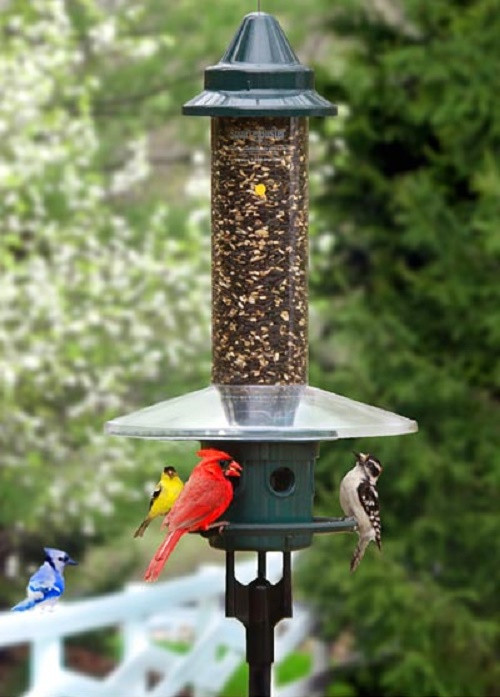 brome squirrel buster plus squirrel proof bird feeder with