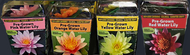 Plantabbs Pre Rooted  Hardy Water Lily Ready Plant Drop -N-Grow