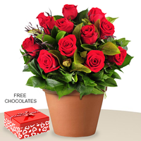12 Red Rose In An Pot, FREE chocolates