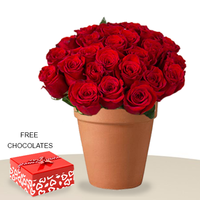 24 Red Roses In A Pot FREE chocolates