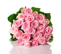 20 Pink Roses Bunch