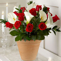 12 Red Roses And Calla Lily Pot