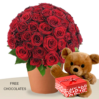 60 Red Roses In A Pot With Teddy And FREE Chocolates