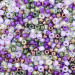 Wine Country Seed Bead Mixes - Size 6