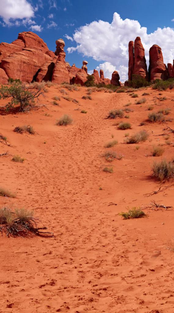 Western Trail Backdrop