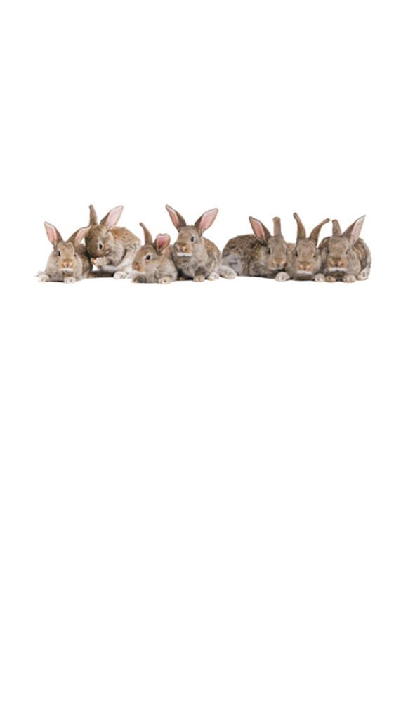 Bunnies Backdrop