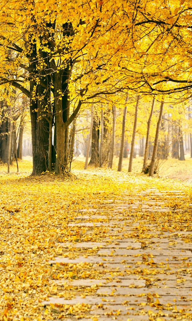 Autumn Path Backdrop
