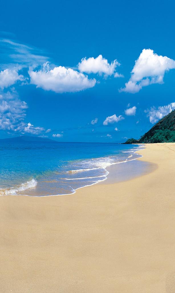 Seaside Simplicity Backdrop