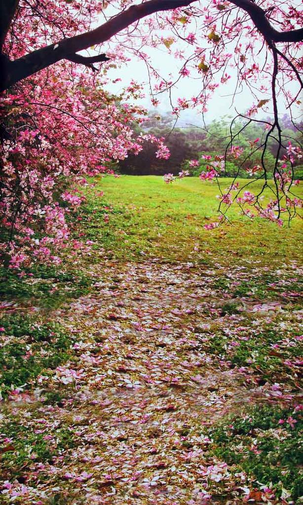 Spring Tree Backdrop