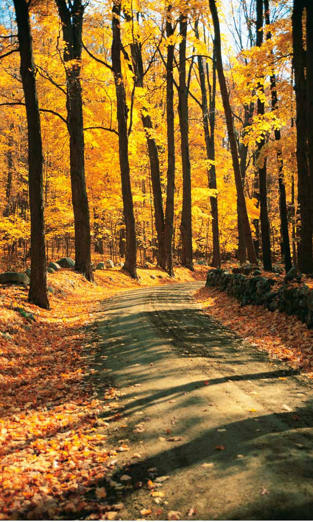 Autumn Road Backdrop
