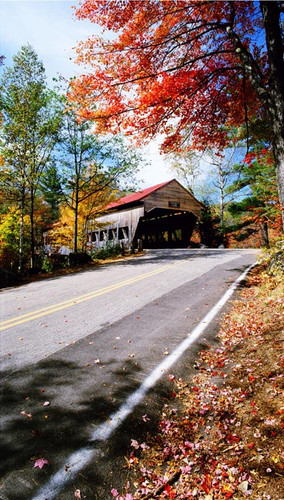 Autumn Covered Bridge Backdrop