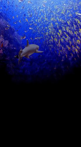 School of Fish Backdrop