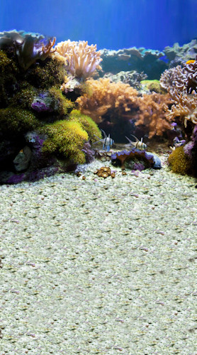 Coral Reef Backdrop