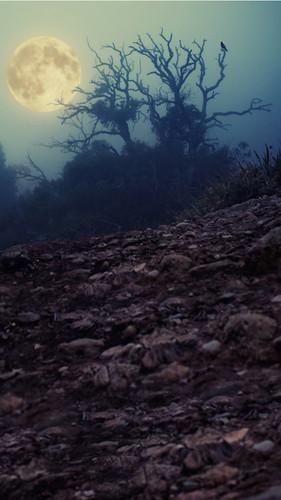Moonbeam Trees Backdrop