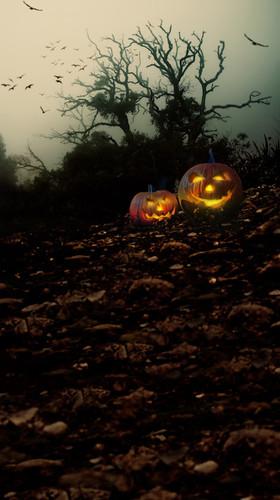 Desolate Woods with Jack-O-Lanterns Backdrop