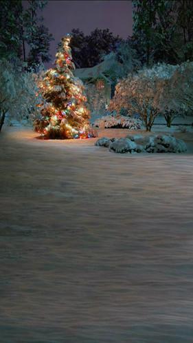 Twilight Tree Backdrop