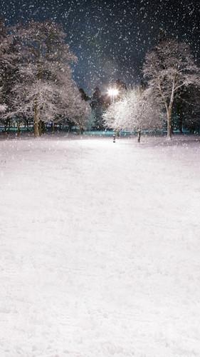 Winter Park Backdrop