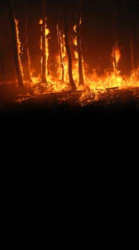 Burning Trees Backdrop