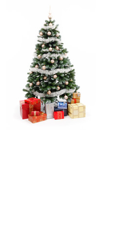 Presents Under The Tree Backdrop
