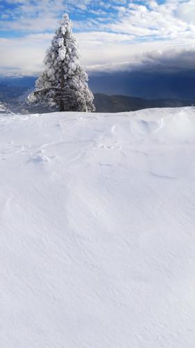 Mountaintop Christmas Backdrop