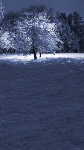 Winter Tree Backdrop