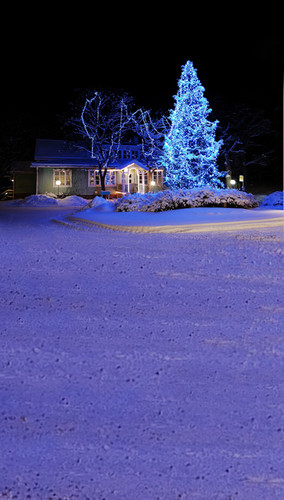 Outdoor Christmas Tree Backdrop
