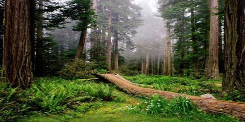 Forest Meadow Wide Format