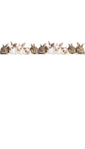Easter Rabbits Backdrop