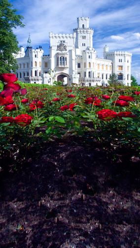 Castle of Roses Backdrop