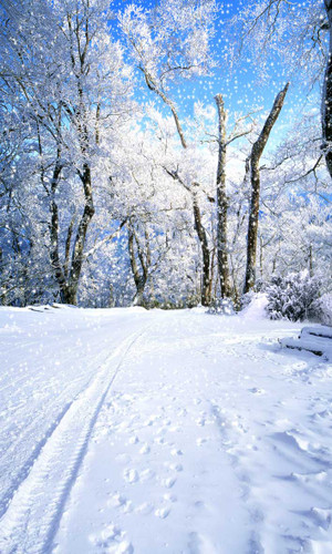 Snowy Road Backdrop