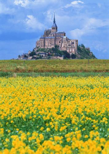 Flower Field Palace Backdrop