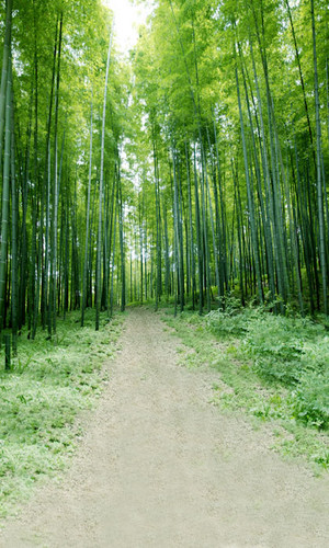 Bamboo Forest Backdrop