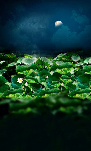 Moonlit Lillies Backdrop