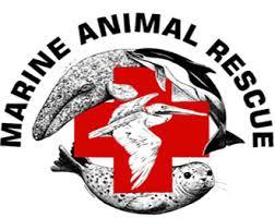 marine-rescue-logo.jpg
