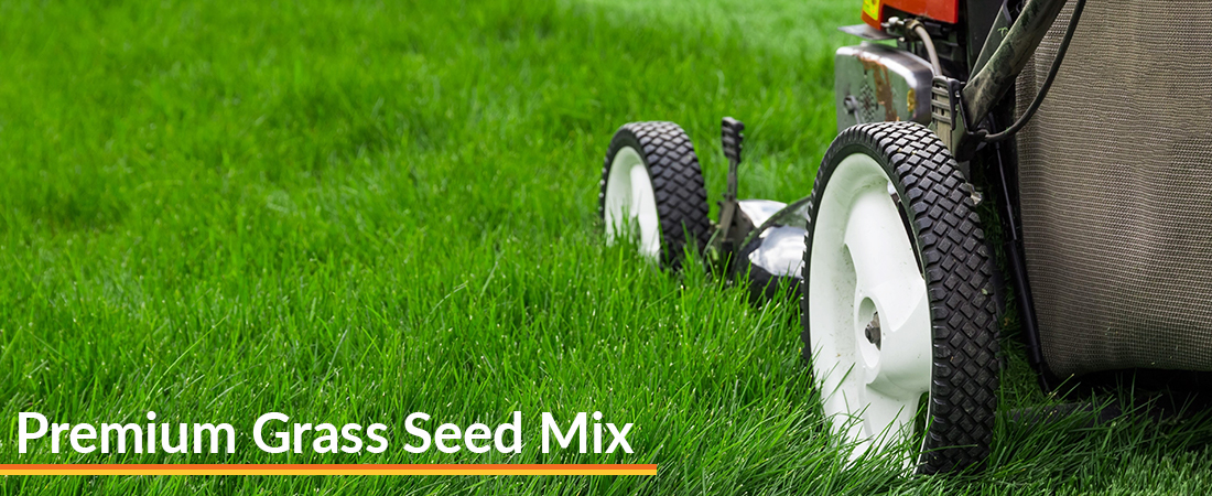Premium Grass Seed Mix