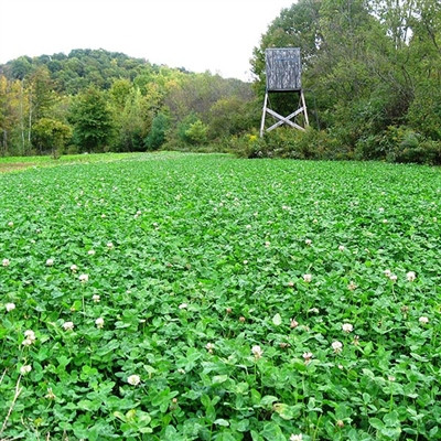 Frontage Clover Blend Perennial Seeds Wildlife Food Plot