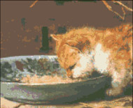 Cat Eating from a Bowl