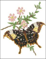 Clytemnestra Butterfly