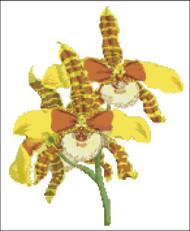 Orchid Pattern 706 (Odontoglossum Grande)
