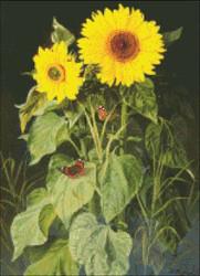 Sunflowers - Niels