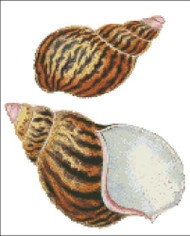 Sea Shell Pattern 805