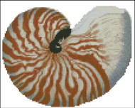 Sea Shell Pattern 806