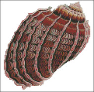 Sea Shell Pattern 809