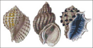 Sea Shell Pattern 811