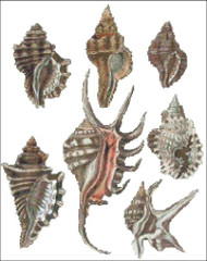 Sea Shell Pattern 815